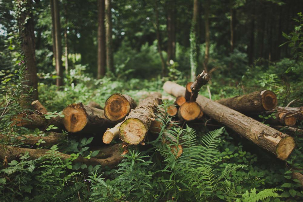 Hilton Park awarded the Wildlife Estates Accreditation label